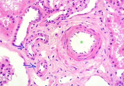 Histol Vasos